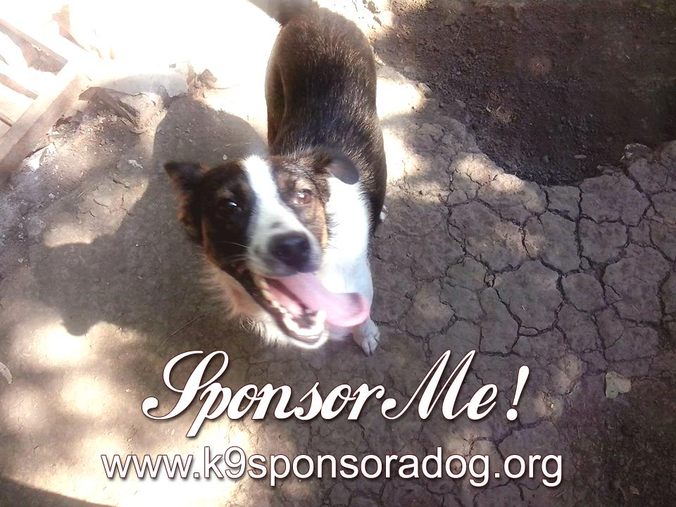 Sponsor a Dog!