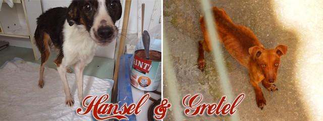 Adopt Hansel & Gretel