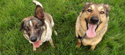 Adopt Billy and Scooby