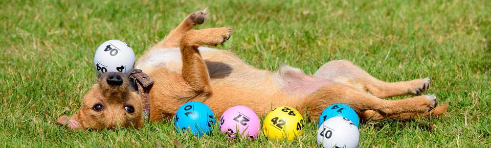 winner-dog