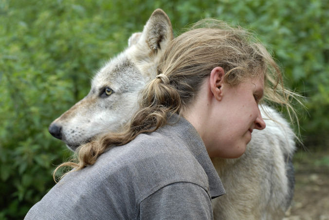 Isla Ellis with a wolf at The Wolf Centre in Combe Martin, Devon, 1st September 2012. Pic by JohnRobertson/BARCROFT MEDIA.