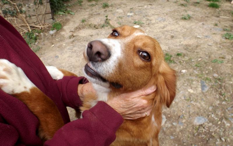 Rohan puppy for adoption